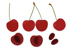 Free cherries vector