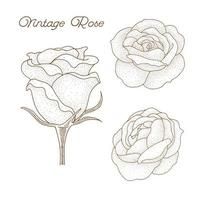 handgezeichnete Vintage Rose Design vektor