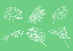Scribble Palm leaf vektor uppsättning