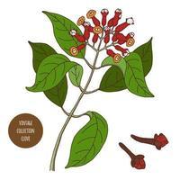 Gewürznelke Vintage Botanik Design vektor