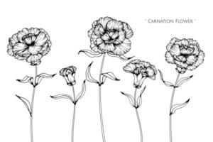 Hand gezeichnete Designs der Nelkenblume und des Blattes