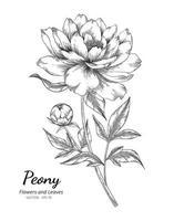 handgezeichnete Pfingstrosenblume