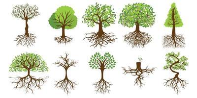 träd med rötter set vektor