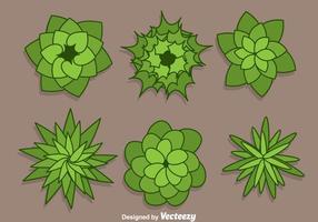 Pflanze Top View Vectors