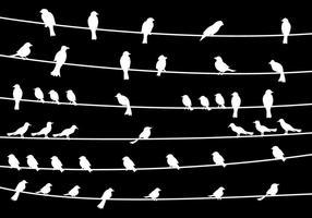 Vogel auf Draht Vektor