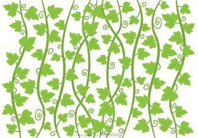 Ivy vinstockar vektor