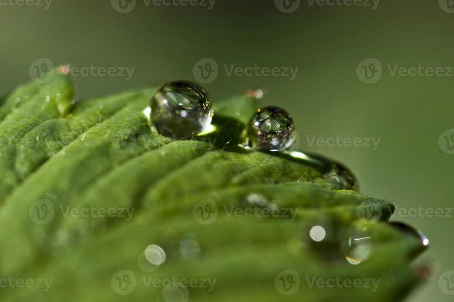 feuille verte avec des gouttes d'eau photo