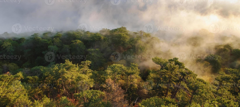 forêt photo