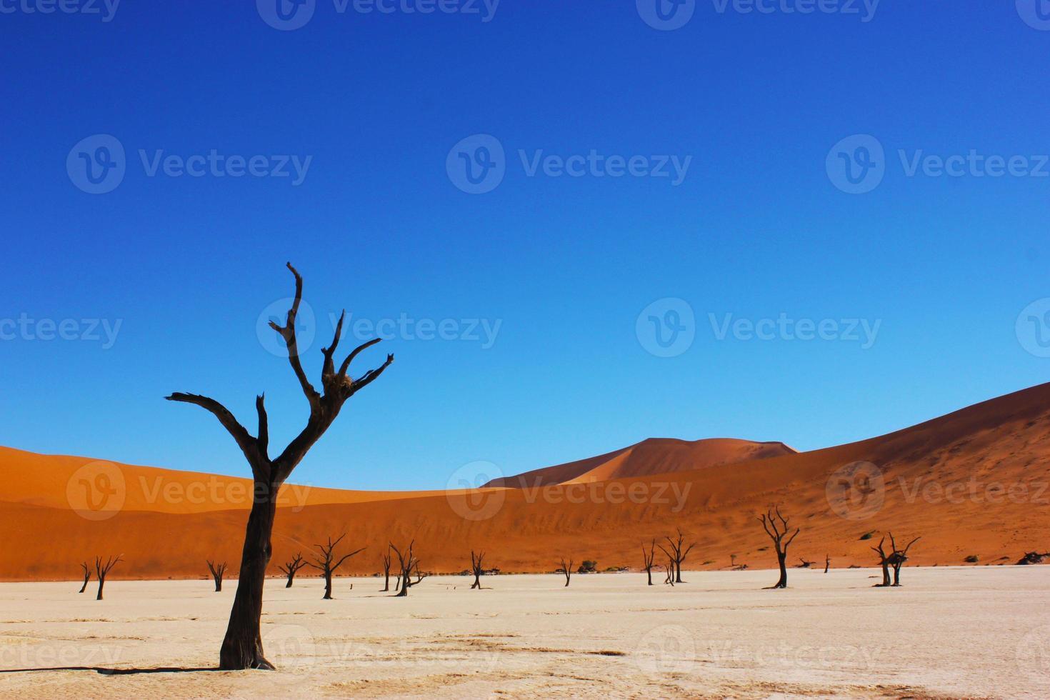 forêt pétrifiée photo