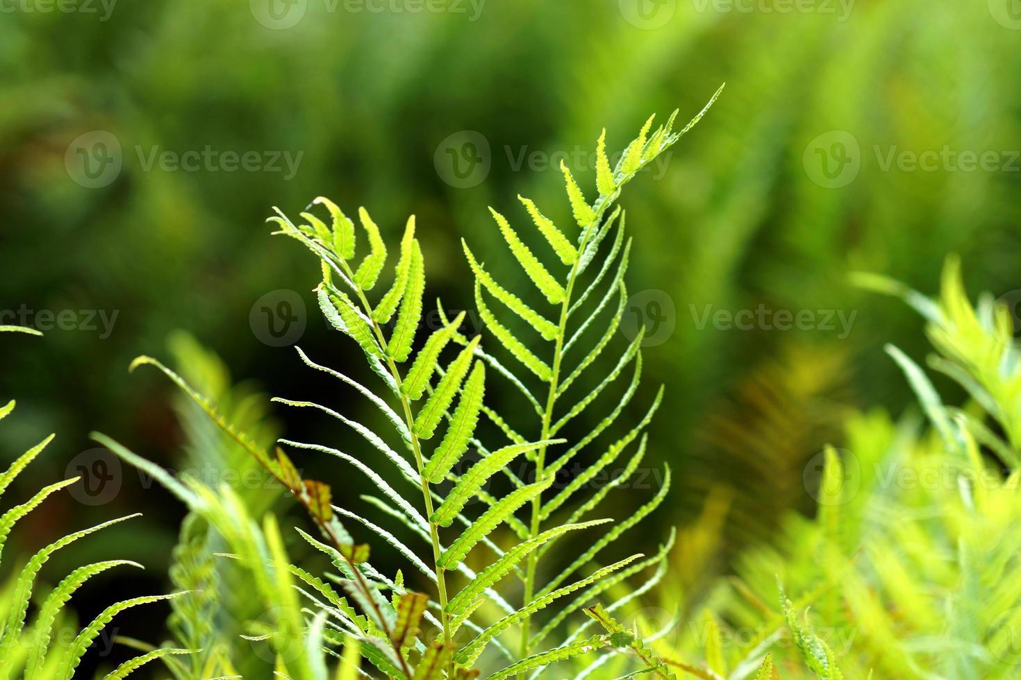 fougère verte poussant dans la forêt photo