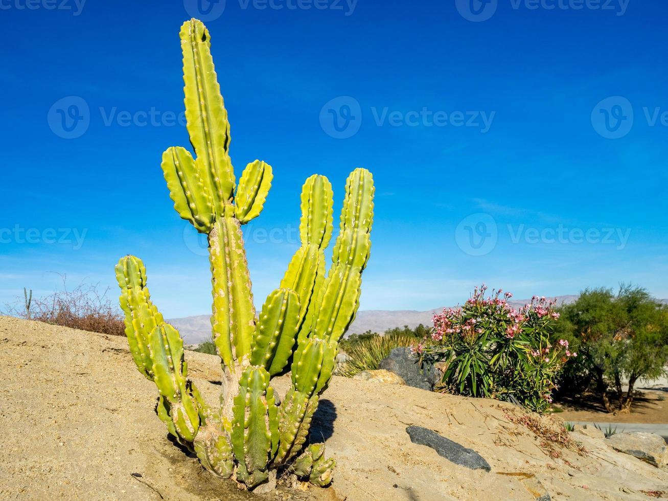 plante de cactus d'Amérique du Nord photo