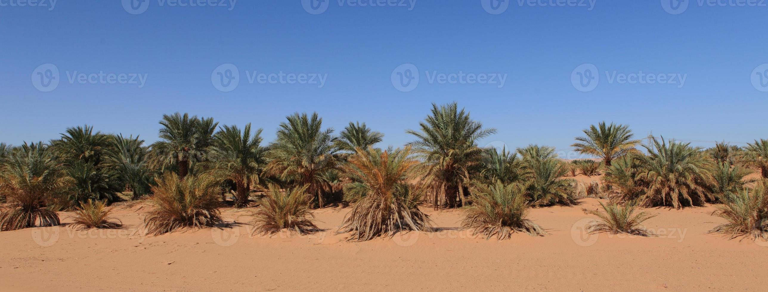 oasen in der wüste sahara photo