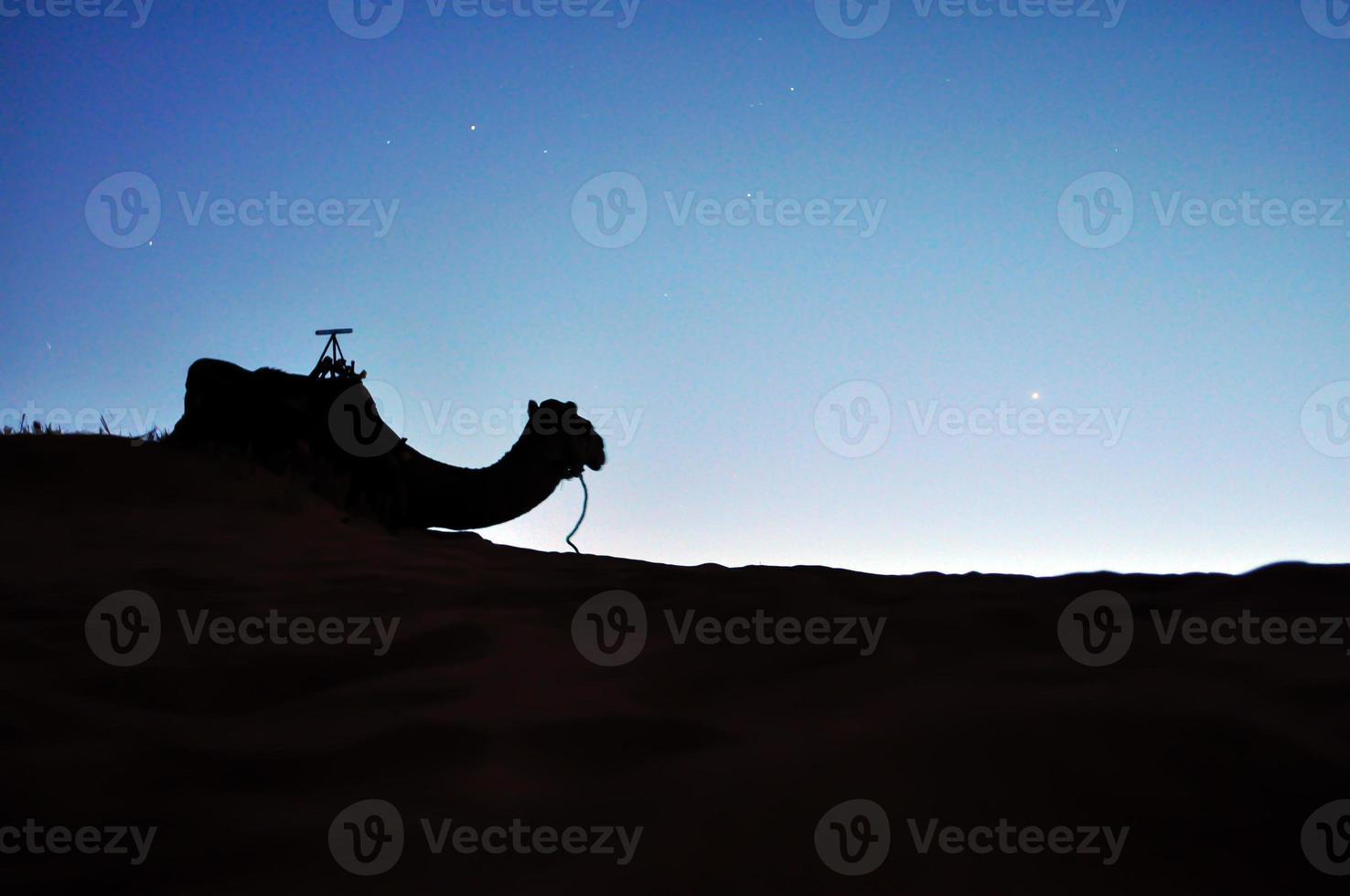 silhouette de chameau du désert photo