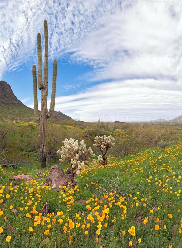 désert fleuri photo