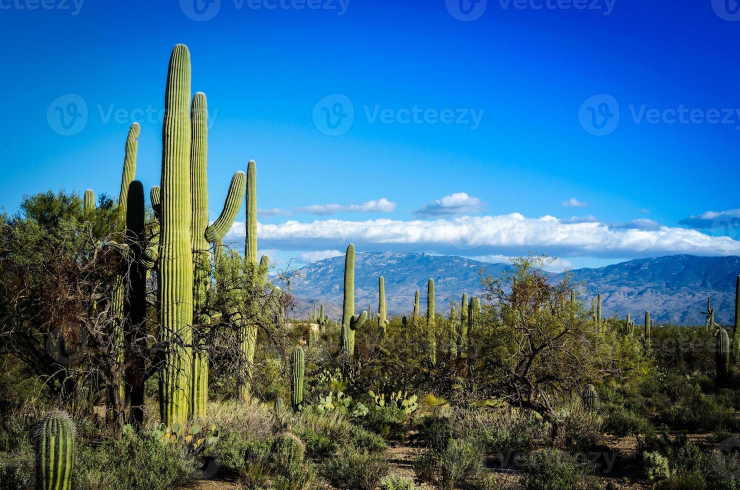 paysage désertique photo