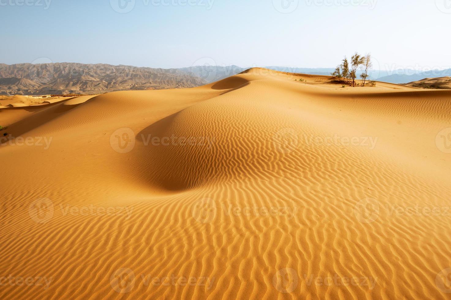 les chameaux du désert photo
