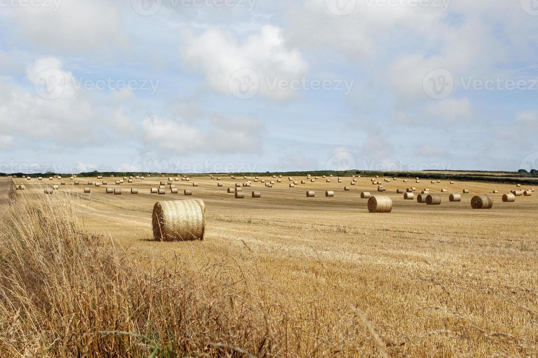 balles de blé photo