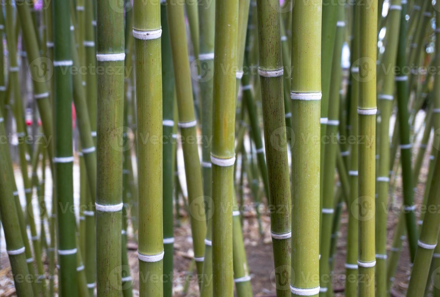 papier peint en bambou photo