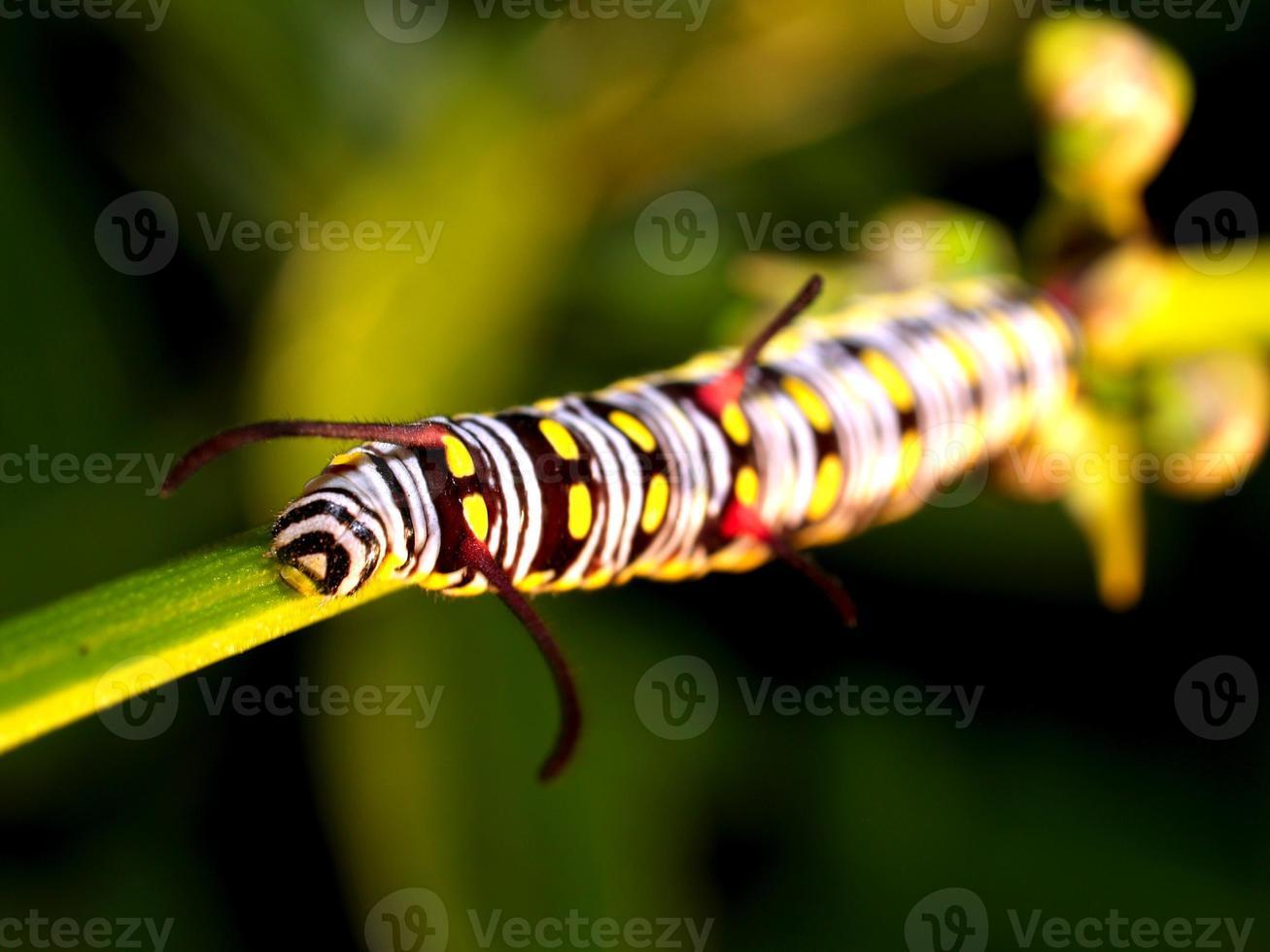 ver de chenille dans la nature photo