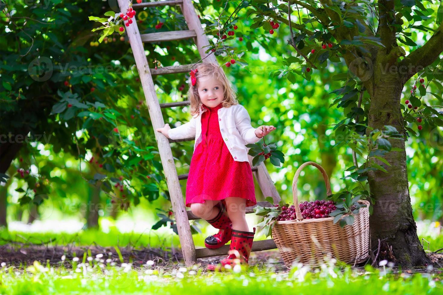 belle petite fille cueillant des cerises fraîches dans le jardin photo