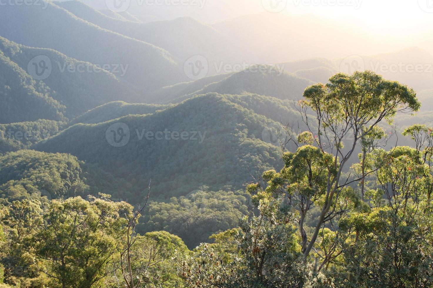 aube de la forêt tropicale photo