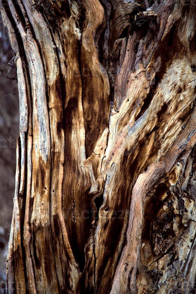 tronc d'arbre multicolore photo
