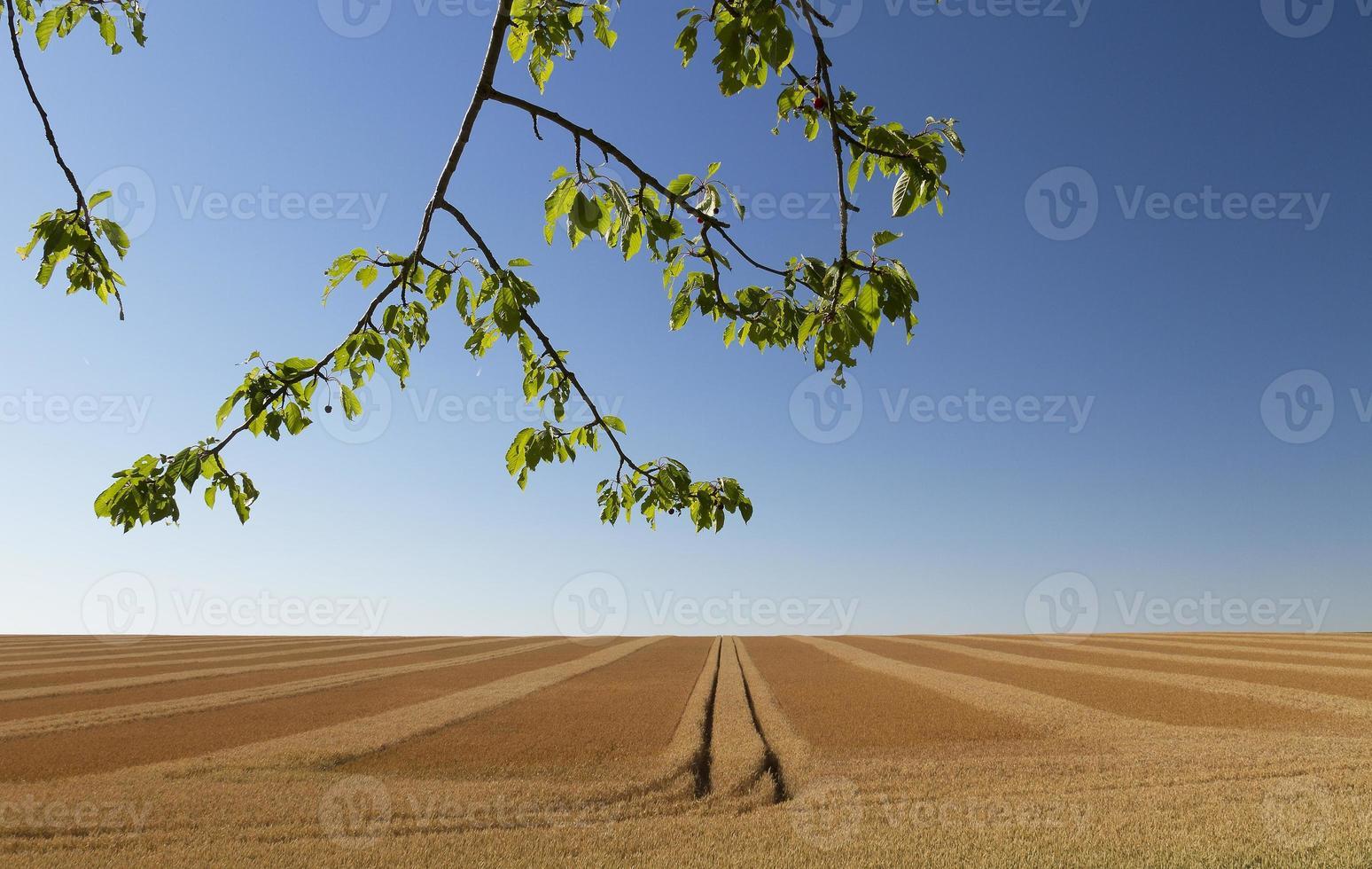 champ de blé sans fin photo