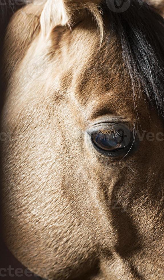 oeil de cheval se bouchent photo