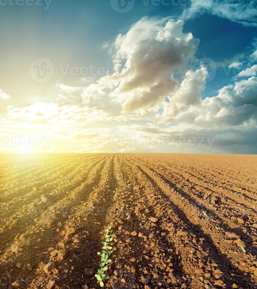 coucher de soleil dans les nuages et champ labouré photo
