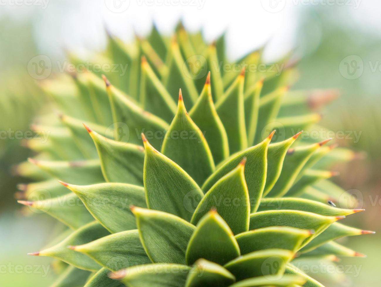 gros plan d'agave vert photo