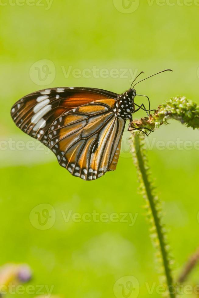 beau papillon photo