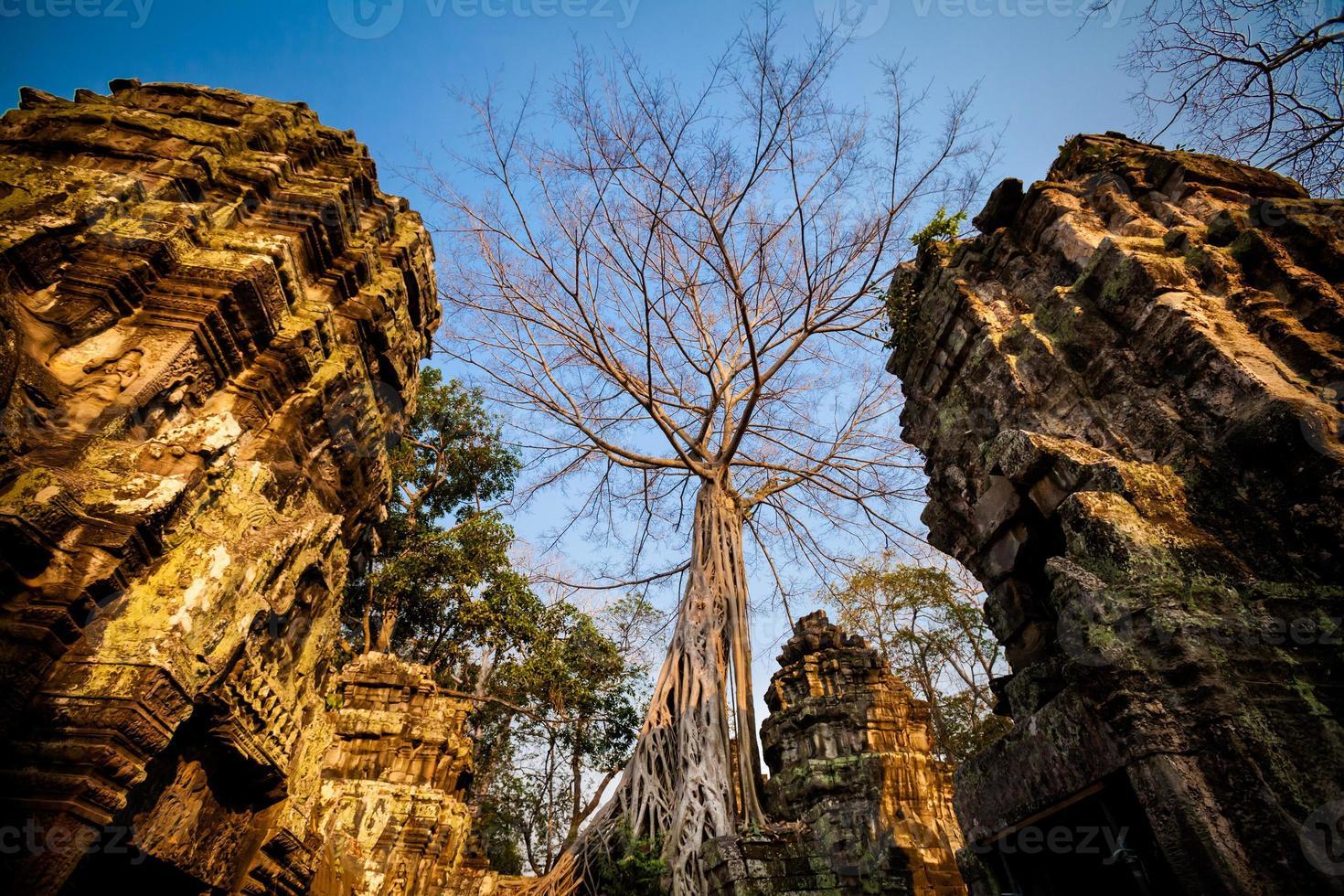 temple ta prohm angkor wat photo