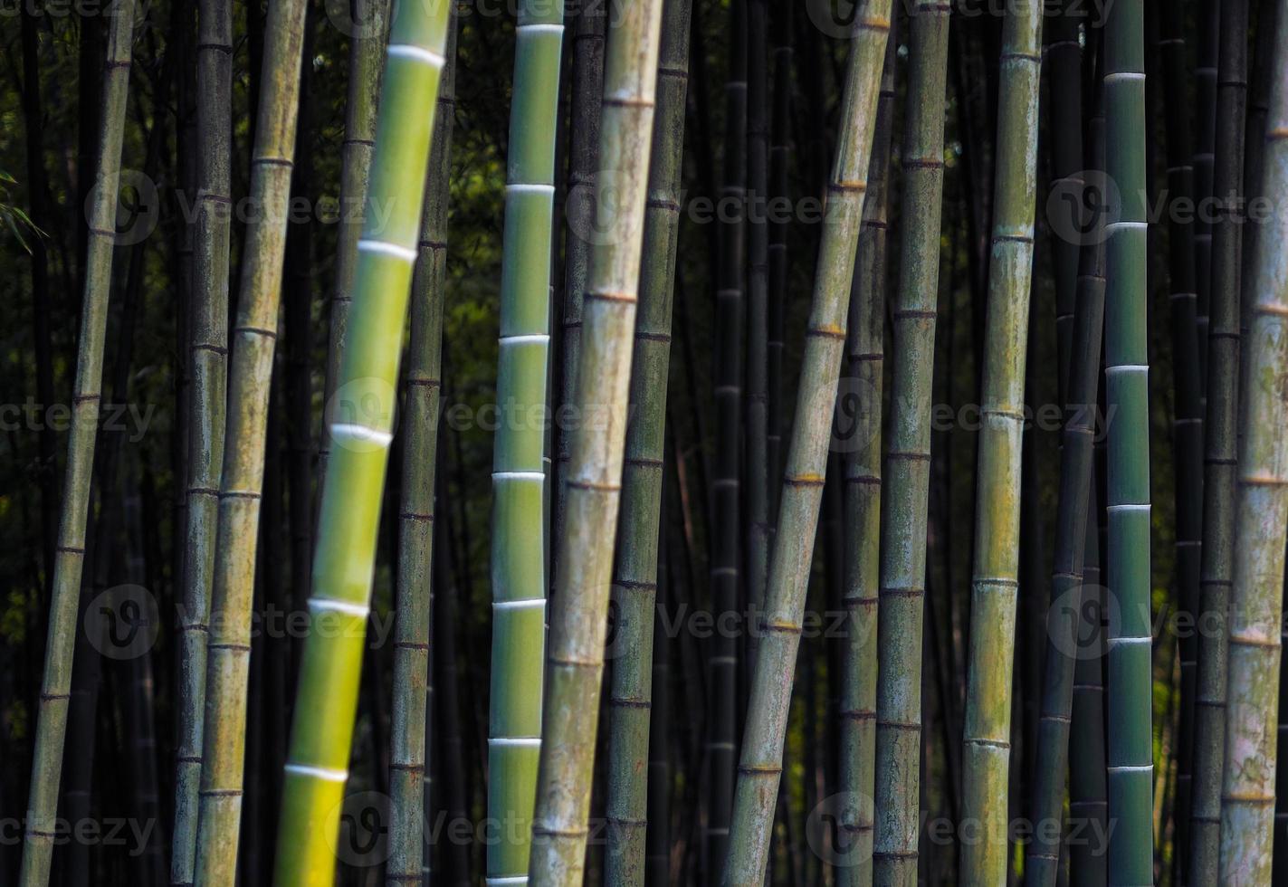 fond de bambou photo