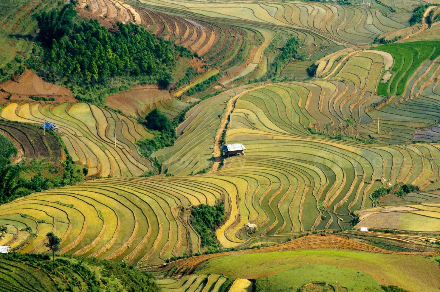 rizières de terrasses au vietnam photo