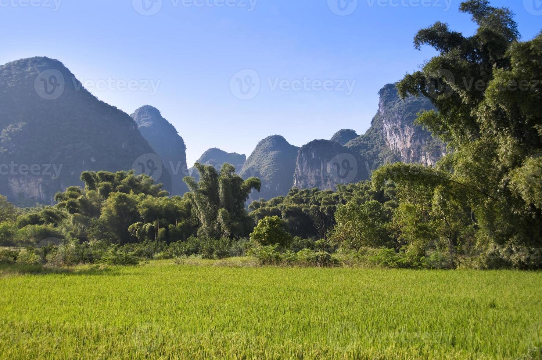 champ de riz et paysage de montagne près de yangshuo, guangxi, chine photo