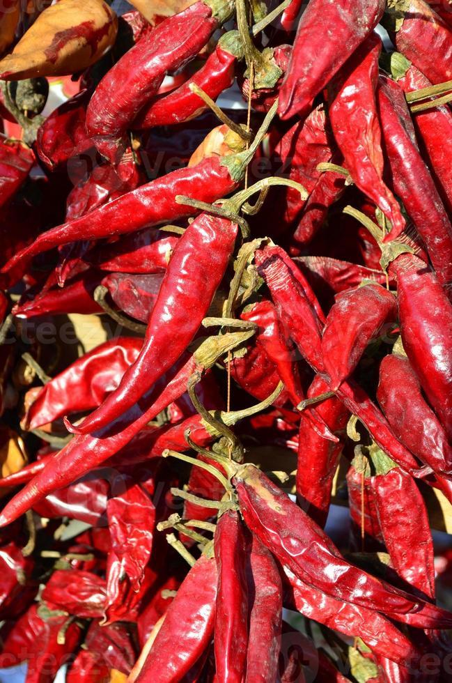 piment rouge séché photo