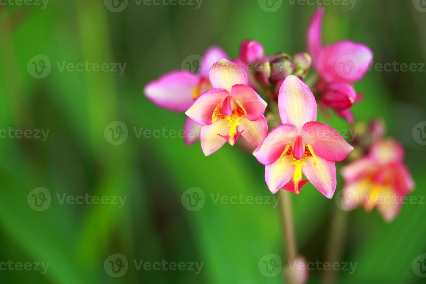 belle orchidée tropicale photo