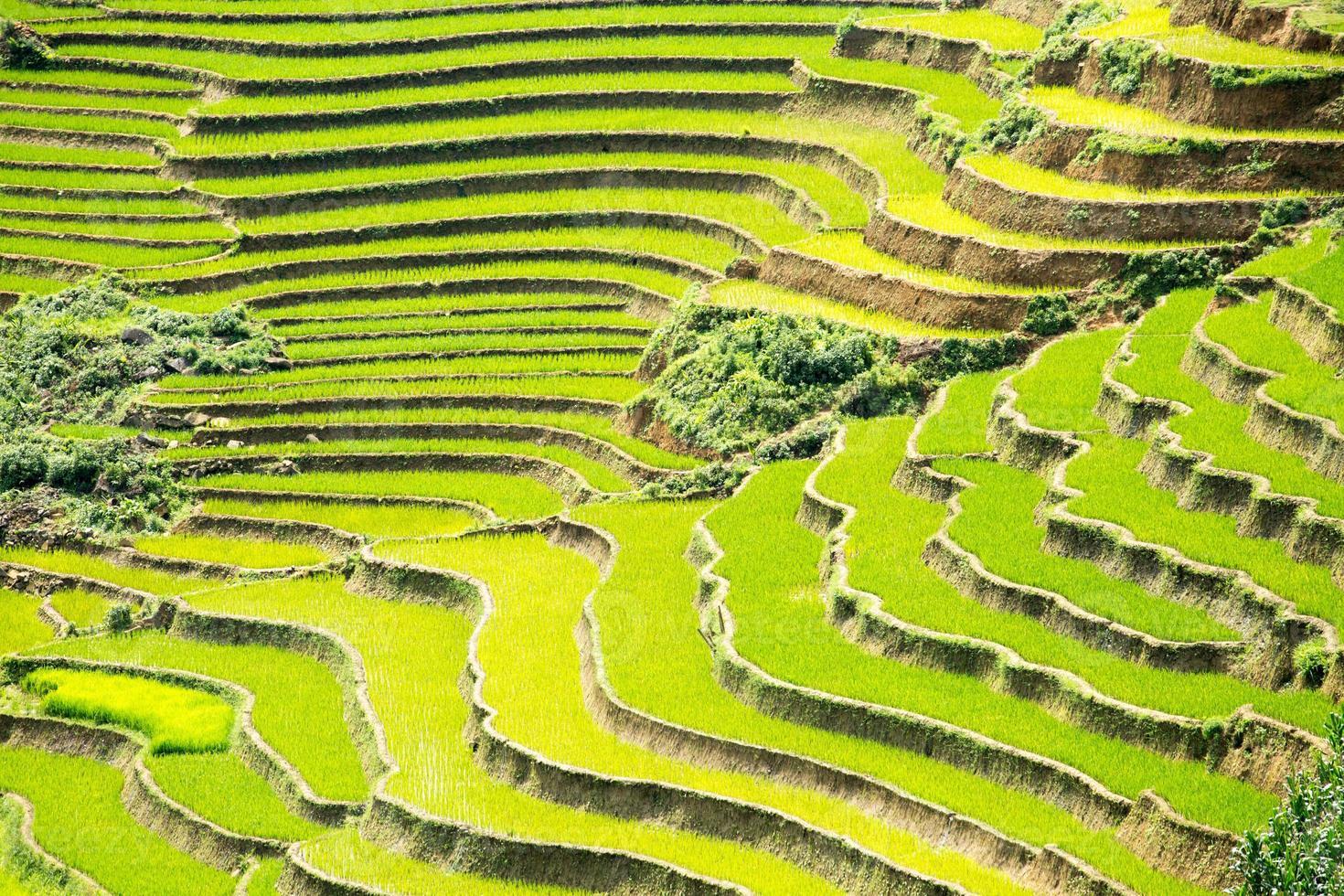 terrasse de riz photo