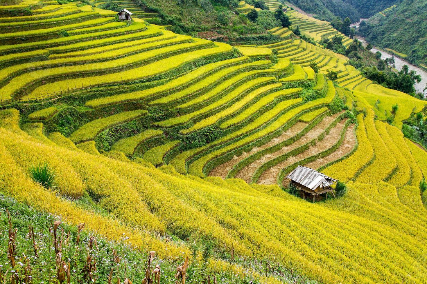 champs en terrasses dans la région montagneuse du nord du vietnam photo