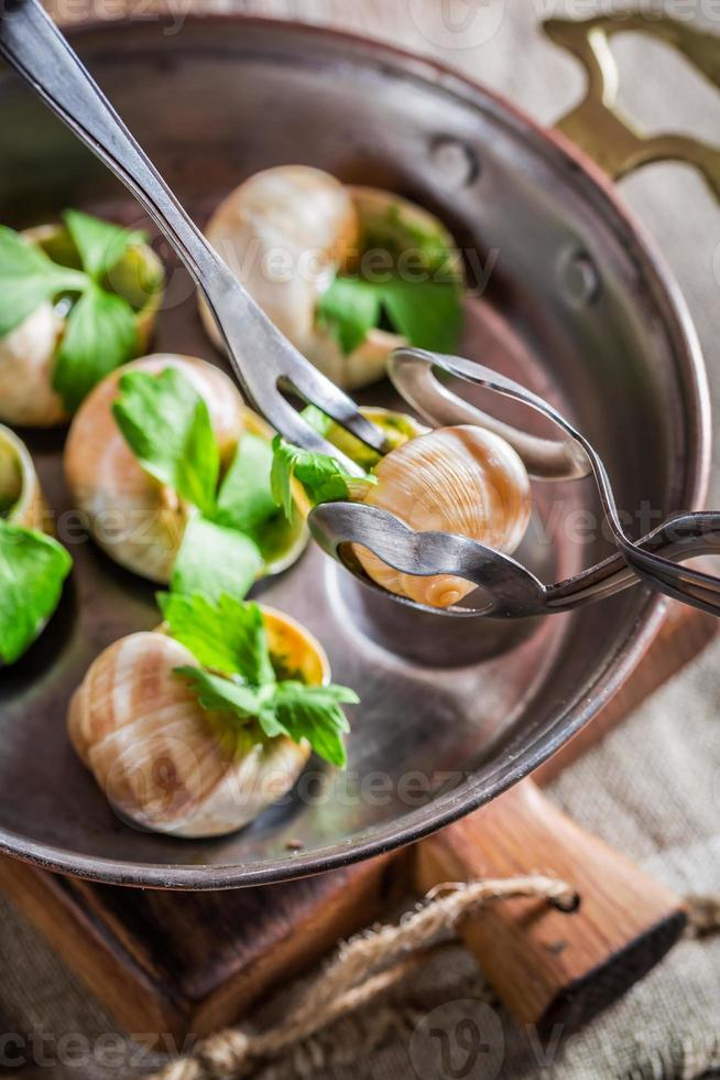 dégustation d'escargots rôtis photo