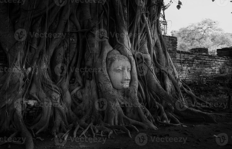 Tête de statue de Bouddha dans les racines des arbres à Ayutthaya, Thaïlande. photo