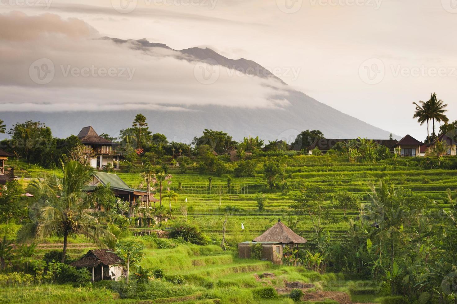 rizières de bali photo