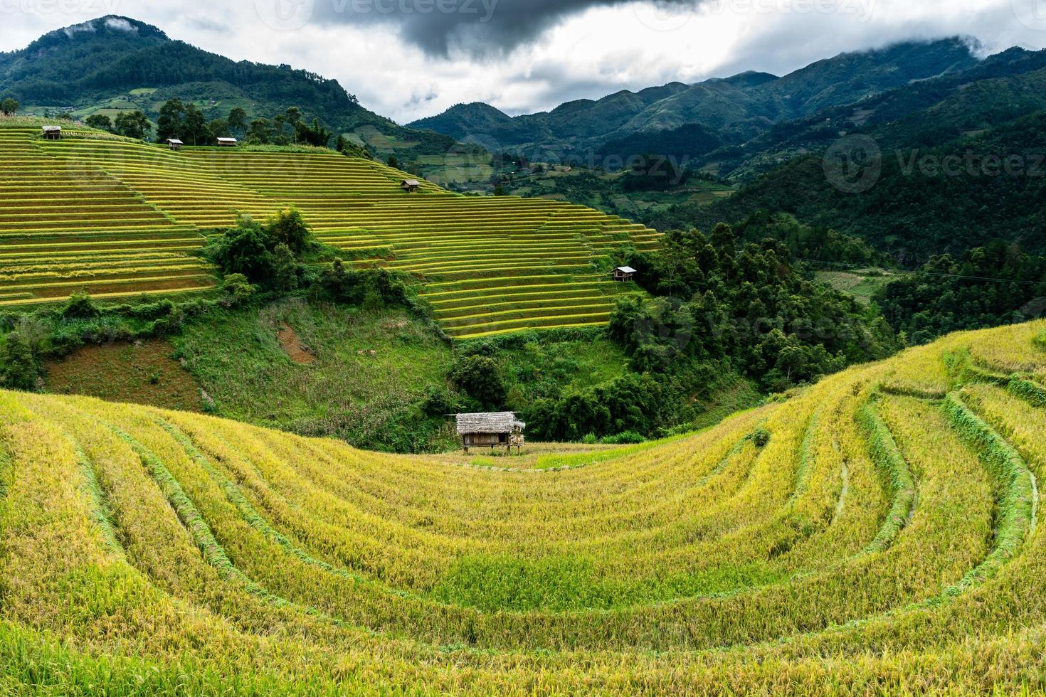Champs de terrasses dorées au nord du vietnam photo