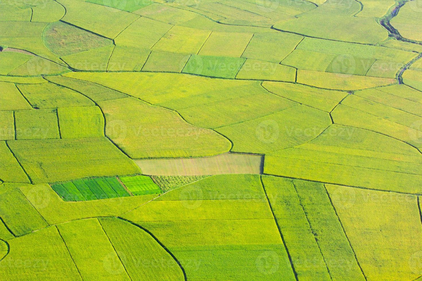 rizière à bac son, vietnam photo