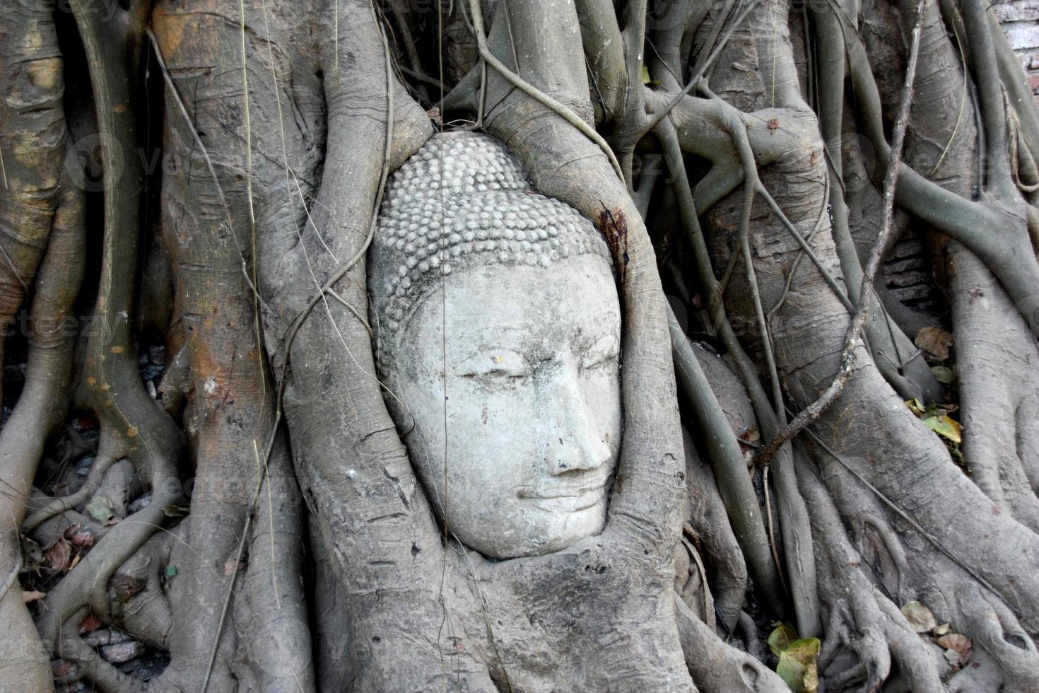 tête de Bouddha recouverte de racines d'arbres photo