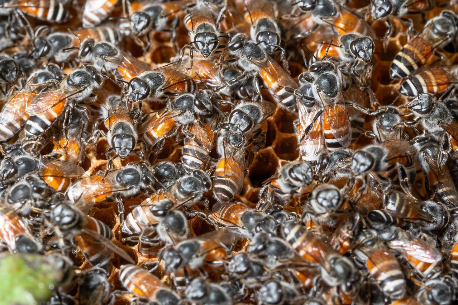 nid d'abeille macro photo