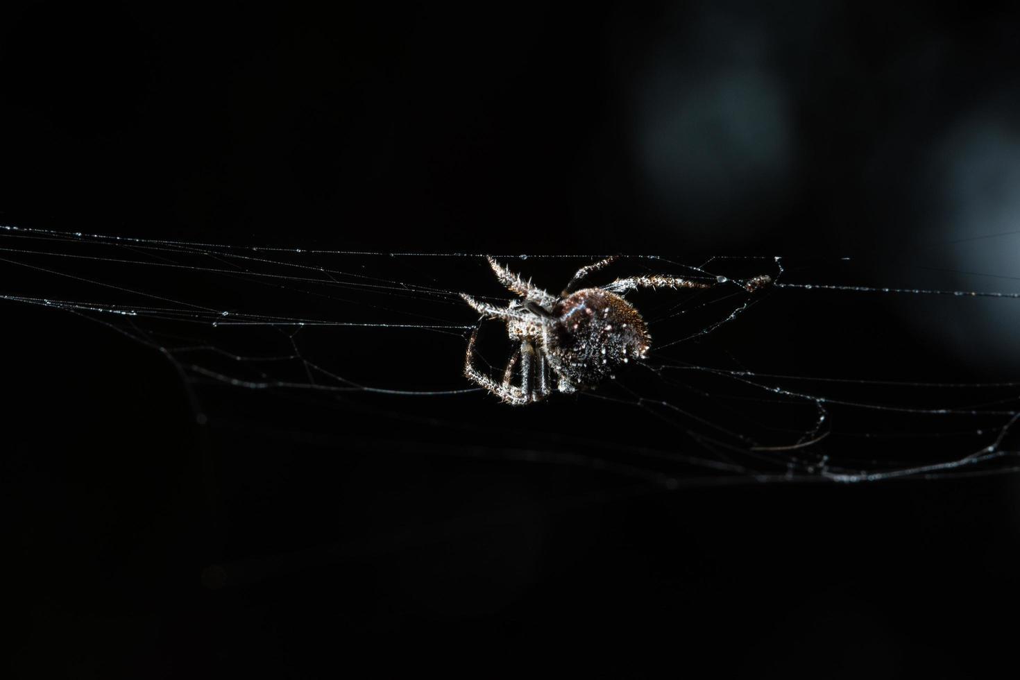 araignée macro traverse la toile d'araignée photo