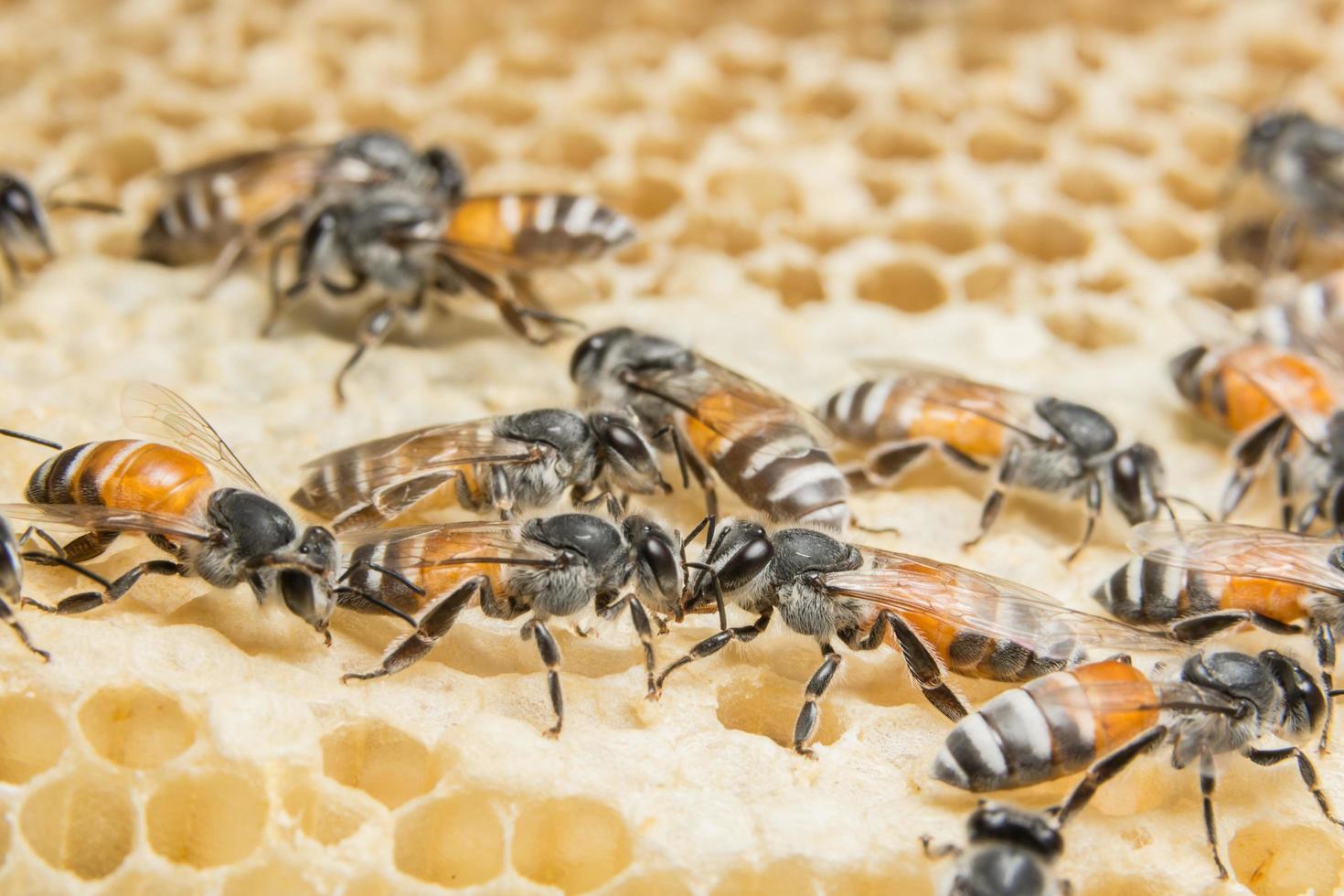 abeilles en nid d'abeille en ruche photo