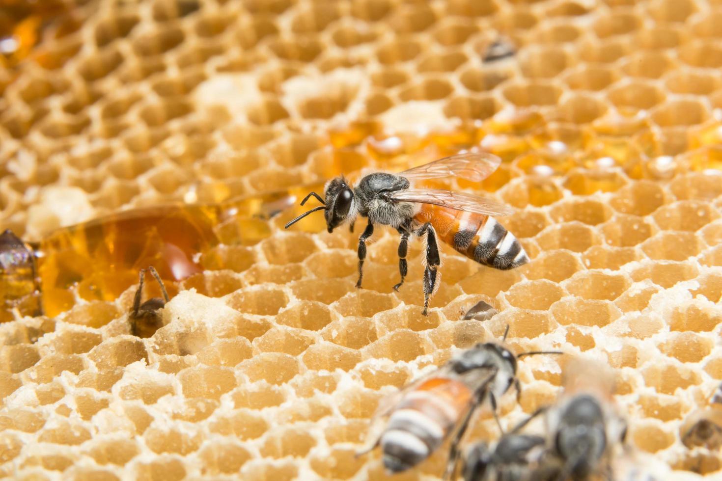 miel et abeille en ruche photo