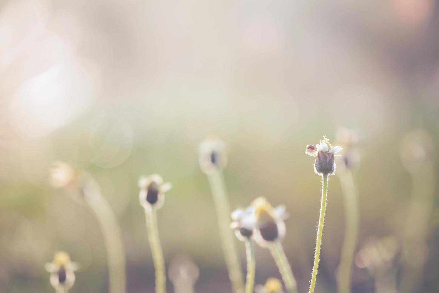 Un plan macro sur une petite coccinelle au sommet d'une fleur photo